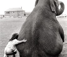 Child and Elephant hugging