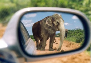 Rearview mirror elephant